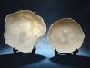 pratos-em-porcelana-translacida-dim-25m-e-30-cm-diam-49